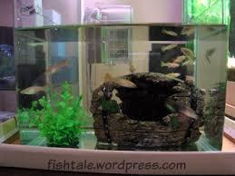 guppy tank fish tale