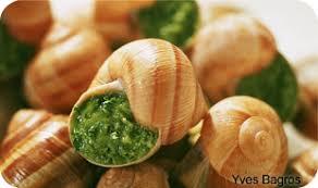 escargot cuisine l escargot cuisine escargot le site des escargotiers pour tout