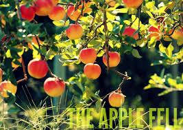 july 15 the apple fell the river walk