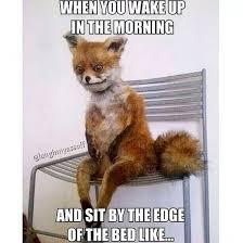 Fox Meme - top 10 funniest stoned fox memes funny pinterest memes