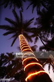 Decorate Palm Trees With Christmas Lights by Nice Ideas Palm Tree With Christmas Lights Outdoor Christmas Decor