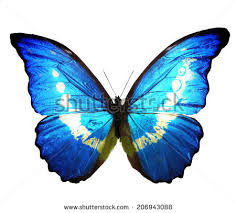 blue butterfly isolated on white background stock illustration