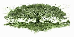 tree care how to prune and plant