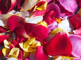 Where To Buy Rose Petals Edible Roses Fresh Edible Flowers From Maddocks Farm Organics