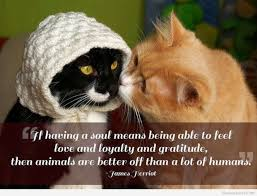 Feel Better Love Quotes by Best Animals Quotes On Hd Images