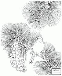 coloring pages birds state birds baltimore oriole and black eyed
