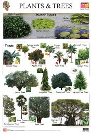 buy educational wall charts plants and trees f b for kids wall
