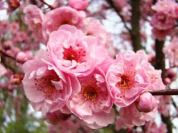 tree blossoms pink flower blossom baslee troutman