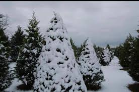 top 25 festive tree farms to find the perfect christmas trees