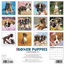 boxer dog 10 months boxers dogbreed gifts com boxer calendars