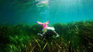 mermaid melissa swims through a field of seaweed u2013 mermaid melissa