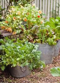 45 best nifty unique and new gardening ideas images on pinterest