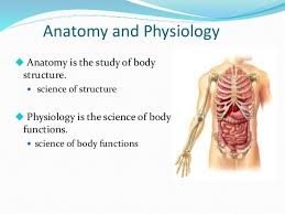 anatomy image organs introduction to anatomy and physiology an