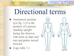 Directional Terms Human Anatomy Ch 1 Introduction To The Human Body Pp 3 10 Ppt Download