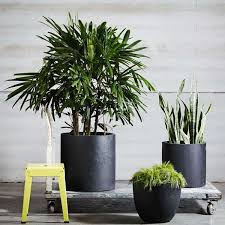Tropical Potted Plants Outdoor - best 25 flower pot design ideas on pinterest painting clay pots