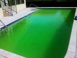 how to eliminate algae is swimming pool u2014 amazing swimming pool
