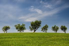 free photo trees hill green blue nature free image on