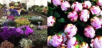 Wholesale Flowers Wholesale Flowers Western Australia Tesselaar Flowers