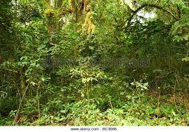 New Hampshire vegetaion images Plants vegetation undergrowth stock photos plants vegetation jpg