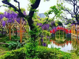 11 great locations to enjoy wisteria arbour in japan tsunagu japan