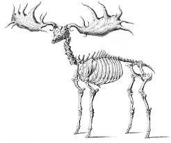 picture of a halloween skeleton instant halloween art printable download walking skeleton man