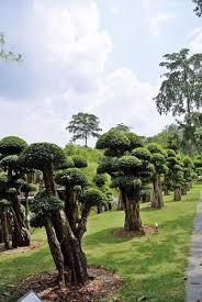 unique trees picture of perdana botanical garden kuala lumpur