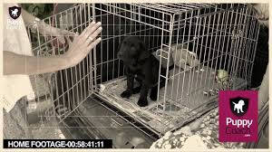 crate training puppy training videos give your puppy the best start in life