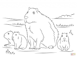 capybara cute babies download for coloring pages animal free