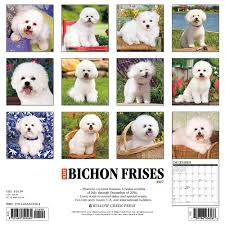 1 month old bichon frise amazon com just bichons frises 2017 wall calendar dog breed