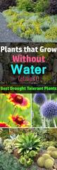 Most Difficult Plants To Grow Best 25 Desert Plants Ideas On Pinterest Desert Landscaping