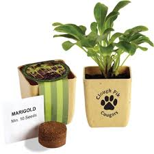 personalized flower pot custom flower pot herb set promotional plant with your logo epromo
