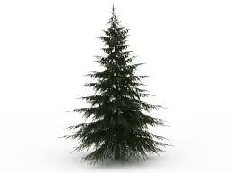 douglas fir tree douglas fir tree 3d model 3ds max files free modeling