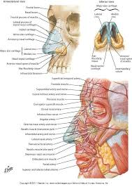 Anatomy And Physiology Of Speech 111 Best Images About Scrub Nurse Humor On Pinterest