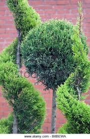 topiary stock photos topiary stock images alamy