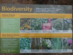 trees are also native plants infowar uc berkeley bombards us with propaganda against trees