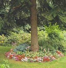 Good Backyard Trees by Flowers Under Shade Trees Plants Spaces And Gardens