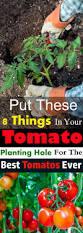 best 25 growing tomato plants ideas on pinterest grow tomatoes