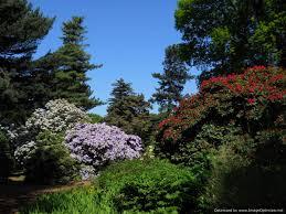 The Royal Botanic Gardens Meet David Knott From Royal Botanic Garden Edinburgh Discover