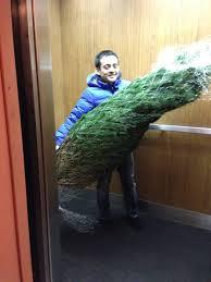 Fresh Cut Christmas Trees At Menards by December 2013 Kimberly Ah