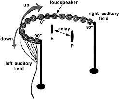 spatially selective auditory responses in the superior colliculus