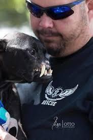 american pitbull terrier jaw 3725 best pitbulls images on pinterest pit bulls pitt bulls and