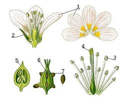 flower encyclopedia flower creationwiki the encyclopedia of creation science