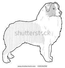 australian shepherd outline akbash dog animal cartoon art stock illustration 600070286