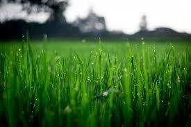 free stock photos of lawn pexels