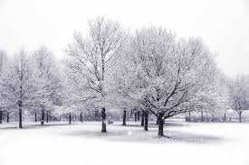 snow trees snow trees rasmus sonderborg flickr