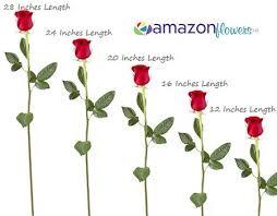 bulk roses roses 20 inches length flowers