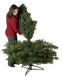 easy setup prelit tree betty s house