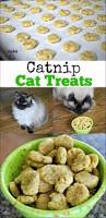 the 25 best cat food ideas on pinterest homemade cat food