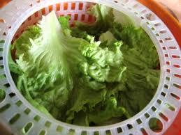 salade verte cuite recette cuisine laitue définition et recettes de laitue supertoinette