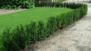 native hedging plants hedging plants archives page 2 of 11 hedge xpress
